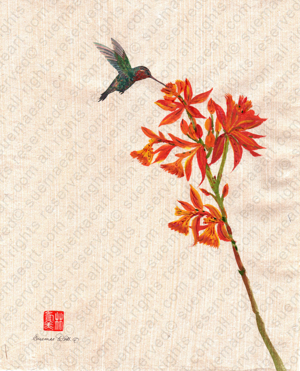 Red Orange Orchid Epidendrum & Hummingbird